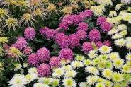 פרחים בפארק