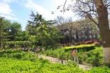 גן ירוק
