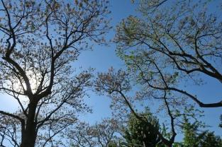 פרחים על רקע השמיים