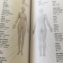 מילון סיני-עברי - גוף האדם